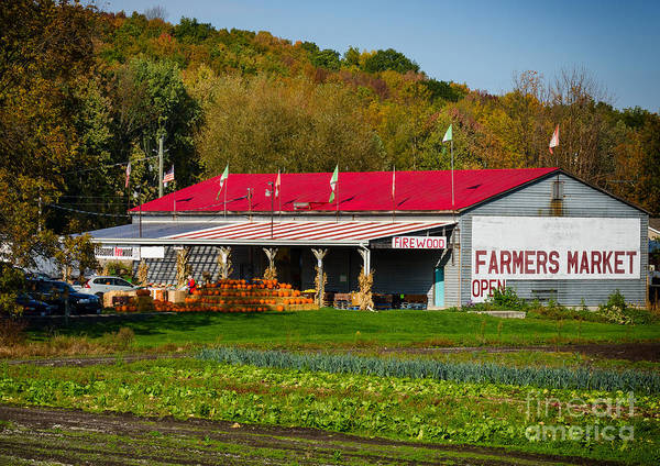 Photograph - Farmers Market With Pumpkins by Les Palenik