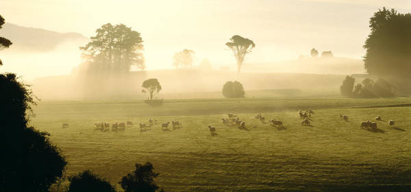 Ewe Photograph - Farmland & Sheep Southland New Zealand by Panoramic Images