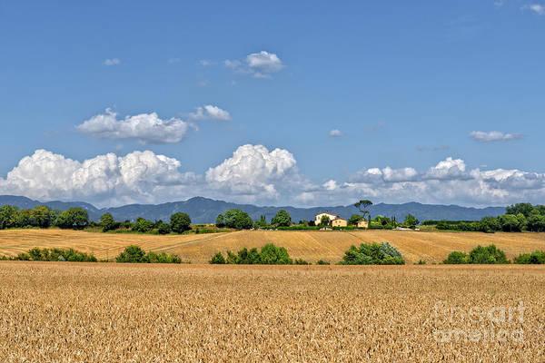 Digital Art - Farmland 4 by Mauro Celotti