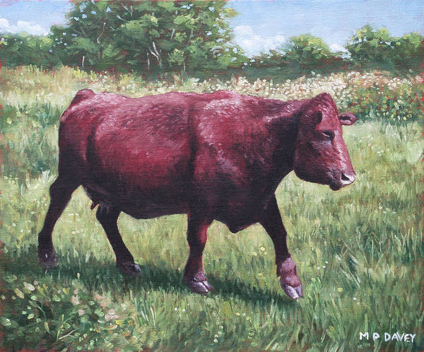 Painting - Fat Cow Running by Martin Davey