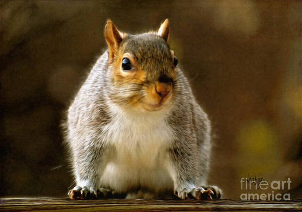 Photograph - Fat 'n Sassy Smile by Lois Bryan