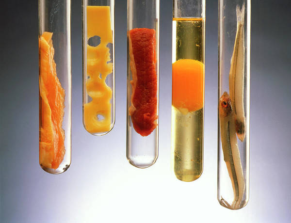 Wall Art - Photograph - Fat-rich Foods Presented In Test Tubes by Oscar Burriel/science Photo Library