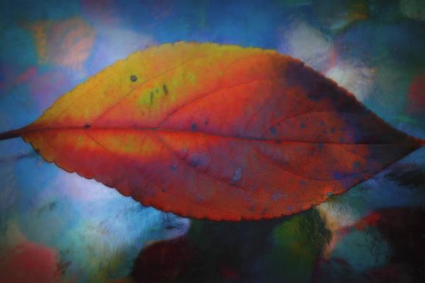 Photograph - Fauvist Hydrangea Leaf by Beth Akerman
