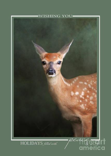 Photograph - Fawn Baby Deer Wildlife Christmas Cards by Jai Johnson