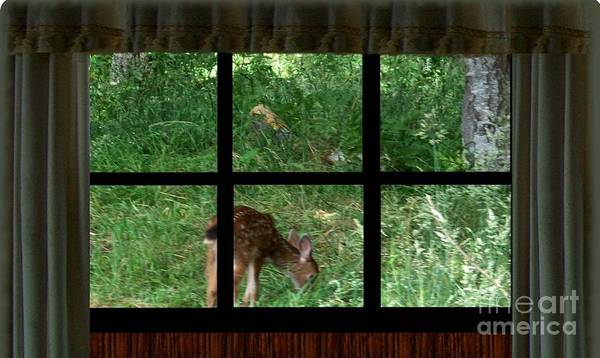 Photograph - Fawn In The Window by Charles Robinson