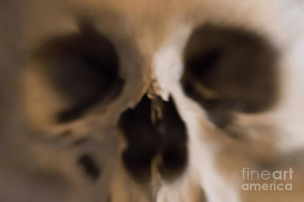 Wall Art - Photograph - Fear And Trembling - Skull by Michal Boubin