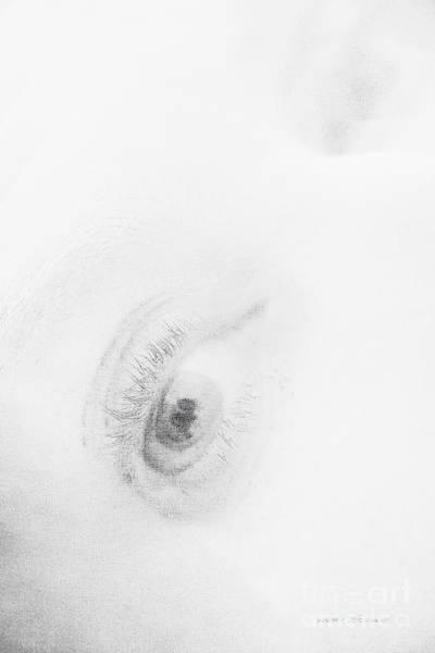 Photograph - Fear by Vicki Ferrari