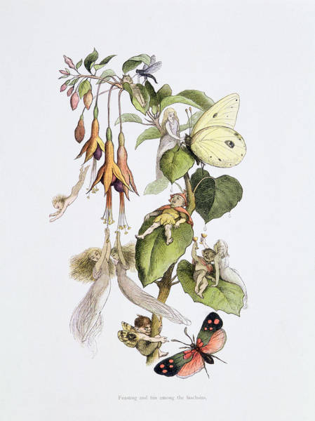 Nymph Drawing - Feasting And Fun Among The Fuschias by Richard Doyle