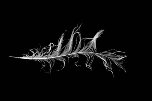 Photograph - feather I by Jeremiah John McBride
