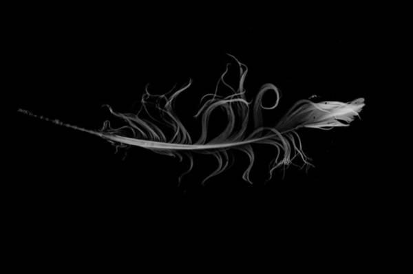 Photograph - feather II by Jeremiah John McBride