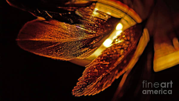 Photograph - Feather In The Back Light by Eva-Maria Di Bella