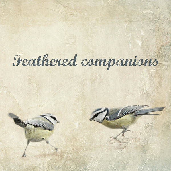 Processing Mixed Media - Feathered Companions by Heike Hultsch