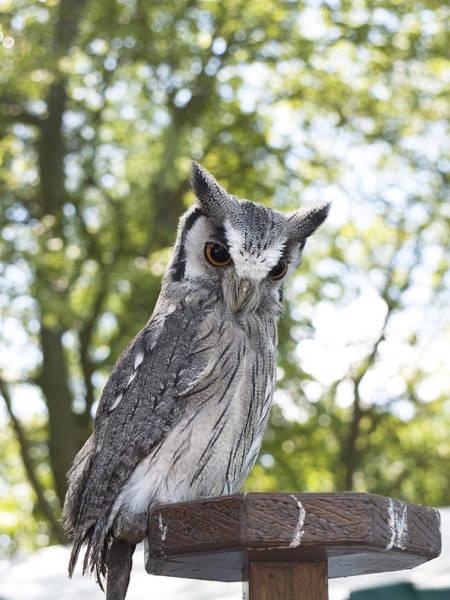 Photograph - Feathered Splendour by Brenda Kean
