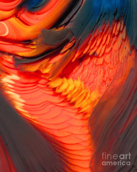 Feathers And Scales Art Print