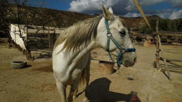 Photograph - Featured Cute Friend In The Mountain Spain  by Colette V Hera  Guggenheim