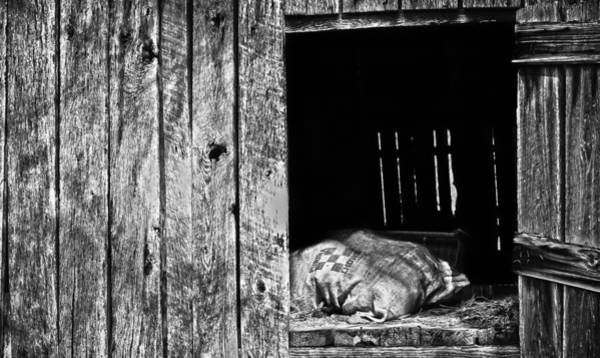Knot Hole Photograph - Feed Sack In Loft  Bw by Greg Jackson