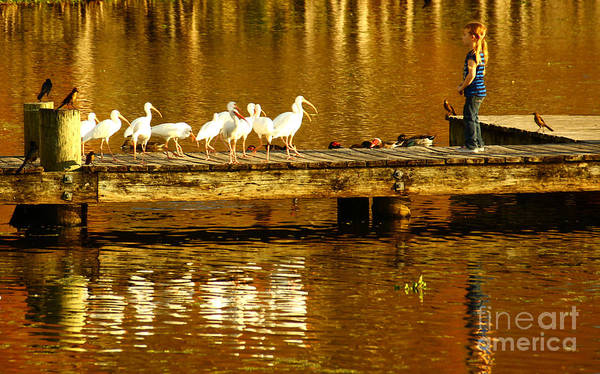 White Ibis Wall Art - Photograph - Feed Us by Marvin Spates