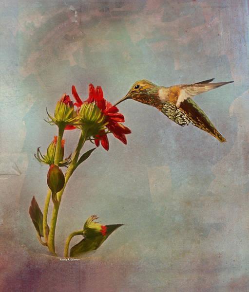 Wall Art - Painting - Feeding Hummingbird by Angela Stanton