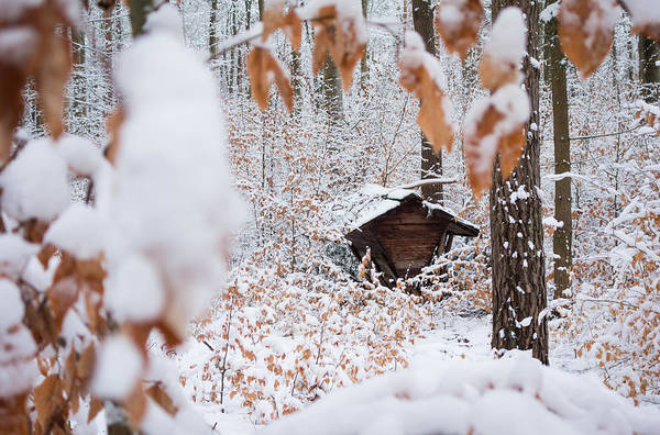 Photograph - Feeding Site In The Forest In Winter  by Matthias Hauser