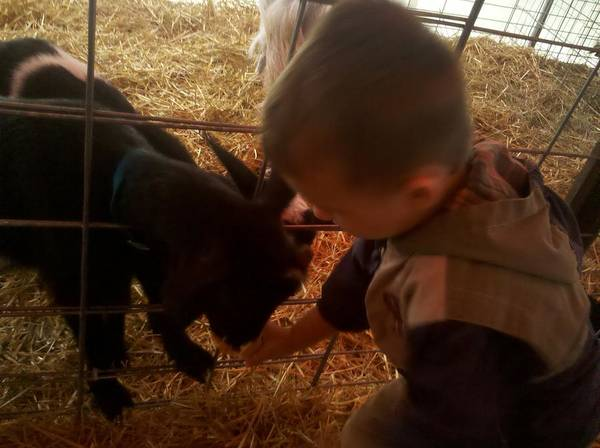Petting Zoo Photograph - Feeding The Goat by Nancy Lynne Campbell