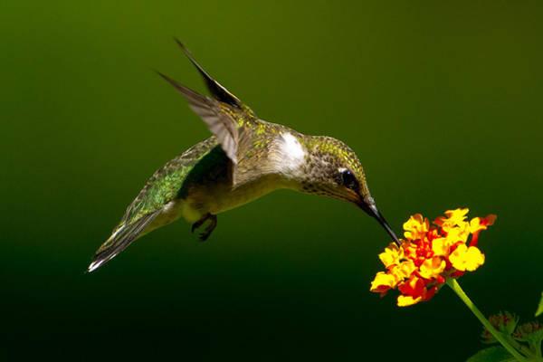 Photograph - Feeding Time 2 by Dave Hahn