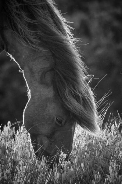 Photograph - Feeding Wild Horse In Evening Light by Bob Decker