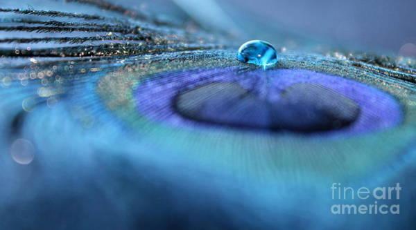 Peacock Photograph - Feeling Blue by Krissy Katsimbras