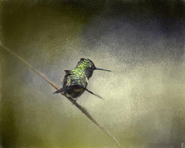 Photograph - Feeling Frisky - Wildlife - Hummingbird by Jai Johnson