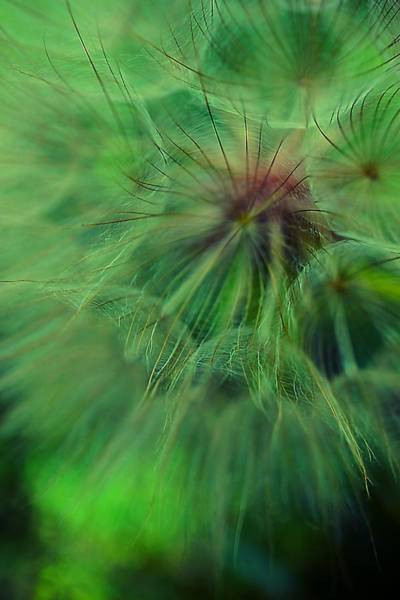 Photograph - Feeling Fuzzy Today by Beth Akerman