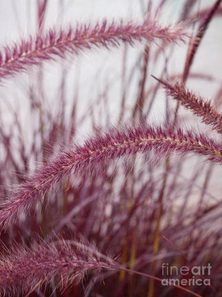 Pennisetum Photograph - Feeling The Wind by Irina Wardas