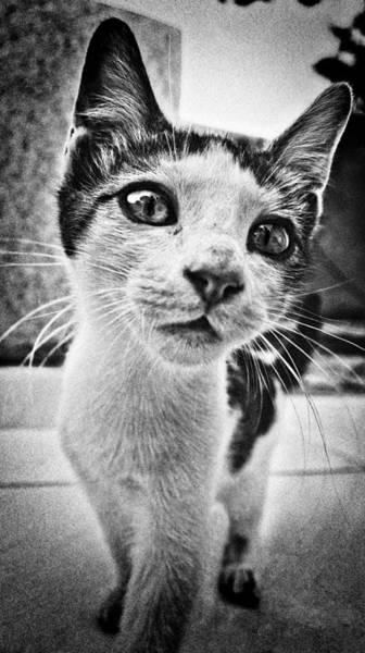 Photograph - Feline Curiosity by Meirion Matthias