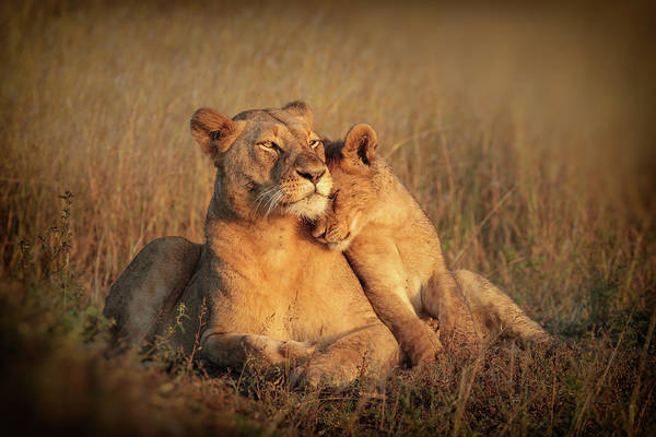 Wild Grass Photograph - Feline Family by Jaco Marx