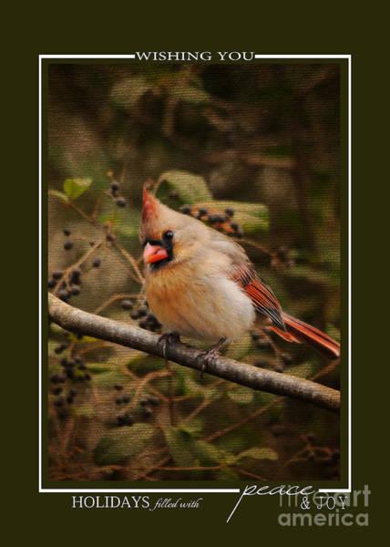 Photograph - Female Cardinal Song Bird Christmas Card by Jai Johnson