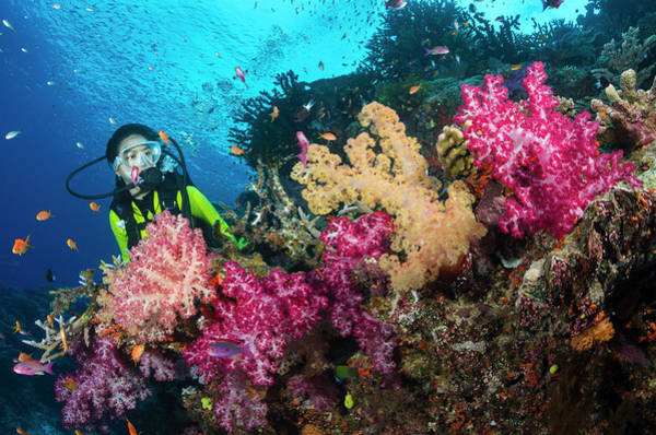 Underwater Photograph - Female Diver And Coral Reef by Pete Atkinson
