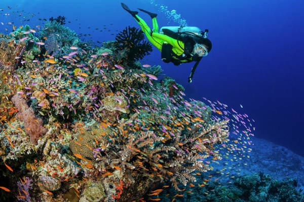 Underwater Photograph - Female Diver And Coral Reef With by Pete Atkinson