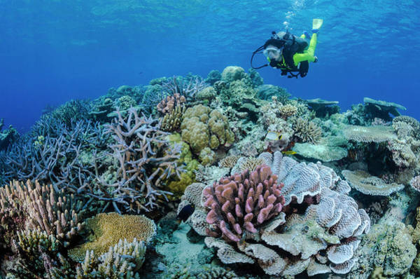 Underwater Photograph - Female Diver And Hard Coral Reef by Pete Atkinson