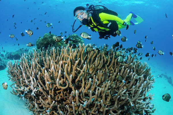 Snorkeling Photograph - Female Diver With Coral And Damselfish by Pete Atkinson