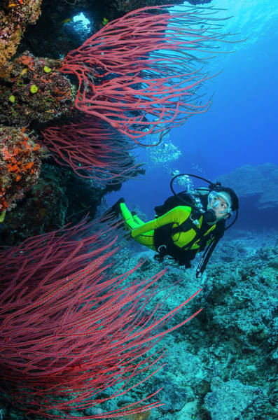 Underwater Photograph - Female Diver With Coral Reef And Sea by Pete Atkinson