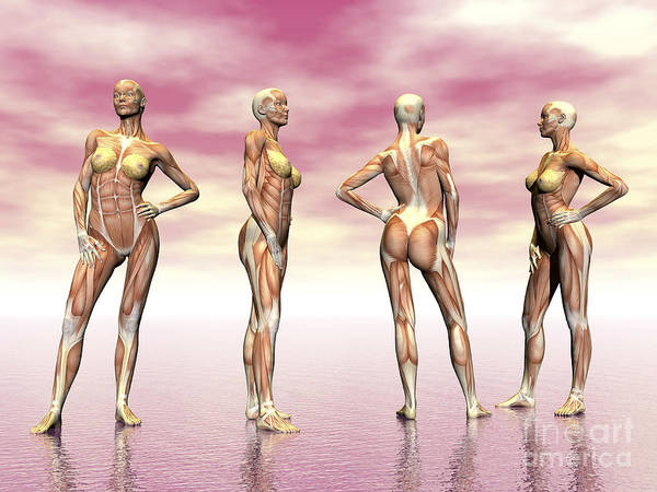 Muscle Tissue Digital Art - Female Muscular System From Four Points by Elena Duvernay