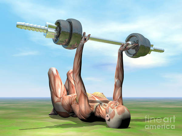 Muscle Tissue Digital Art - Female Musculature Exercising by Elena Duvernay