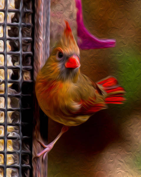 Photograph - Female Northern Cardinal by Robert L Jackson