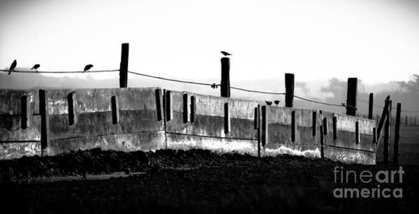 Photograph - Fence And Birds by Jo Ann Tomaselli