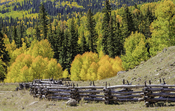 Photograph - Fence And Fall Colors II by David Waldrop