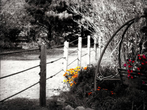 Tree Top Photograph - Fence Near The Garden by Julie Hamilton