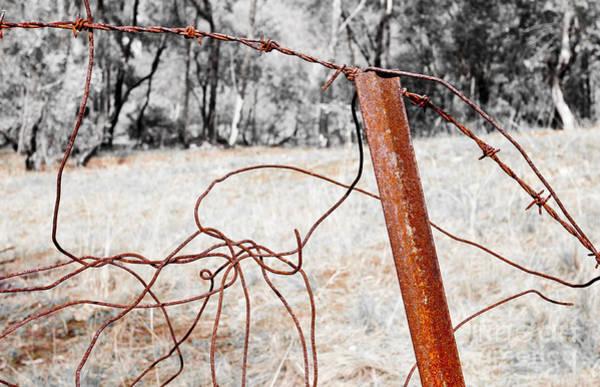 Photograph - Fence by Steven Ralser