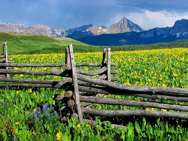 Photograph - Fenceline Flowers by Rick Wicker