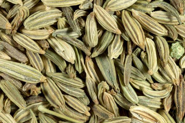 Photograph - Fennel Seeds Macro by Paul Cowan