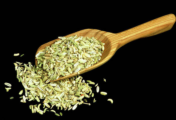 Wall Art - Photograph - Fennel Seeds by Th Foto-werbung/science Photo Library