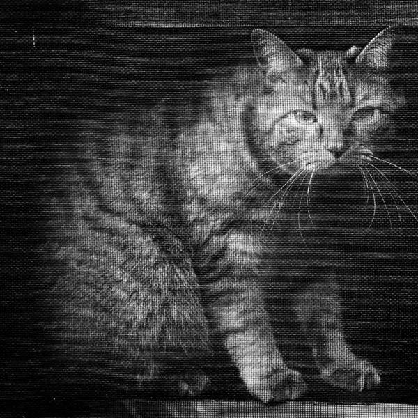Photograph - Fergus The Indoor Cat B by Patrick M Lynch