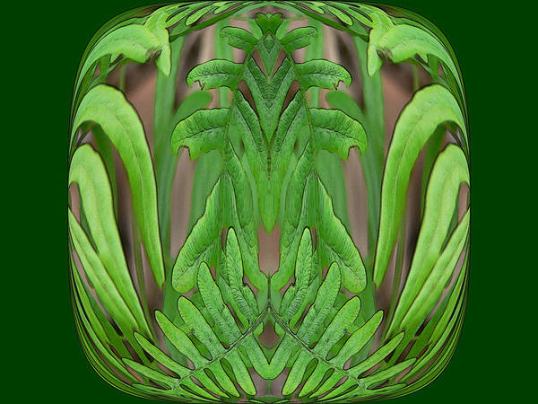 Digital Art - Fern Brain by Kathy K McClellan